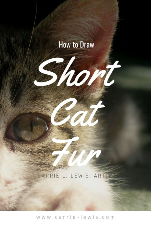 How to Draw Short Cat Fur