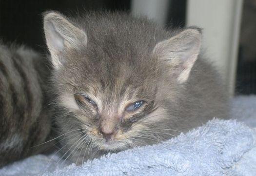 Kitten Posse Pee Wee Then