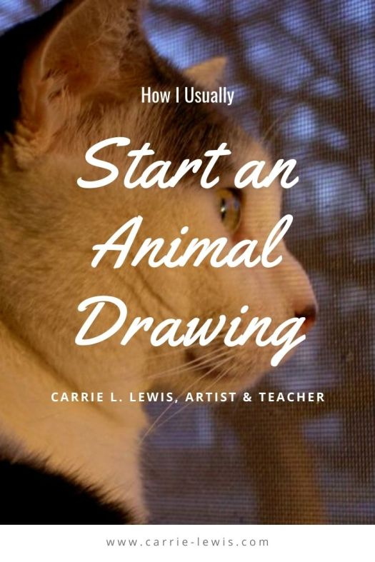 How I Usually Start an Animal Drawing