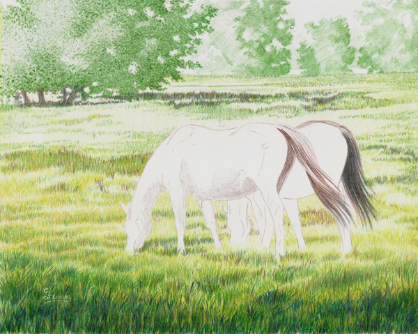 My Colored Pencil Painting Process: An Overview