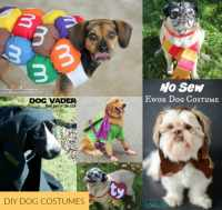 DIY Dog Costumes - Carrie Elle