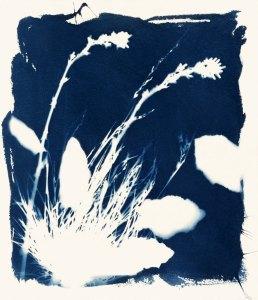 Lederer-4-Leaves