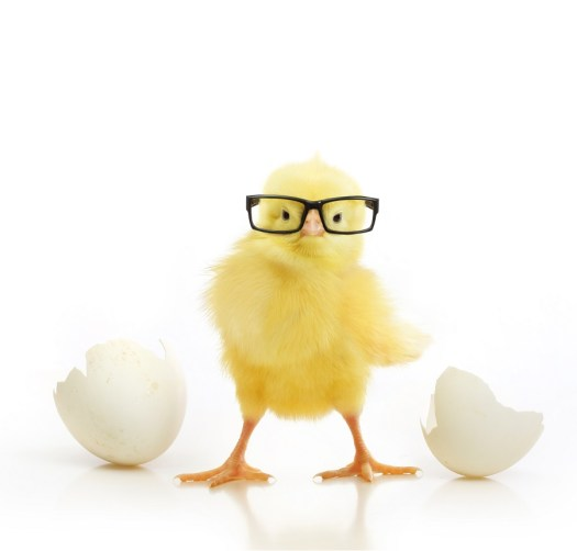 Don't rush the chick!