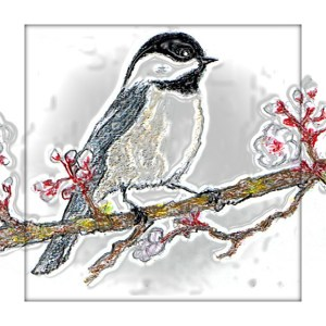 Chickadee blossoms square card