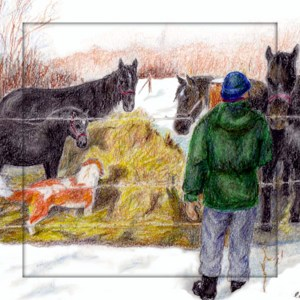 Percherons square image for card
