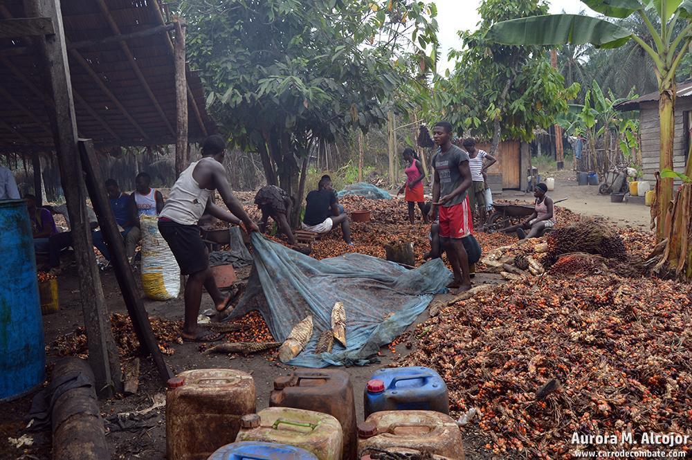 Son muchas las familias que se utilizan la palma para la fabricación artesanal de sus propios aceites. Foto: Aurora M. Alcojor