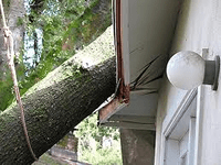 Fallen Trees and Homeowners Insurance – what's covered?