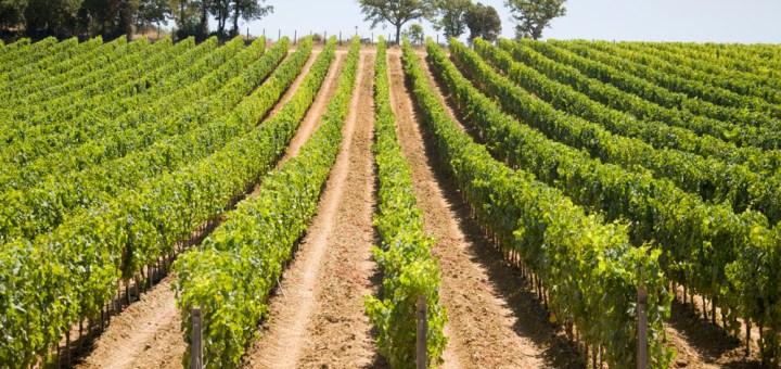 aziende_vitivinicole