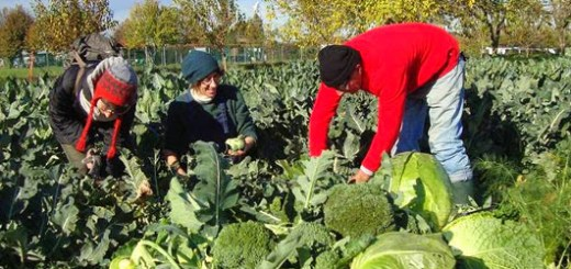 arvaia_agricoltura_bio
