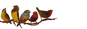 Ser pássaro, ensaio para muitos voos   Mário Afonso