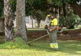 Trabajos de poda de palmeras y acondicionamiento zonas verdes