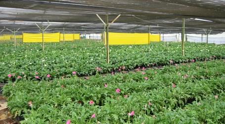 Empresa Florexpo cerrará operaciones en Paraíso