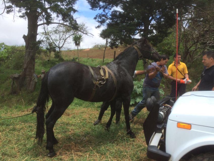 """La yegua """"Furia"""" fue rescatada con vida. Foto: Bomberos de Cartago"""