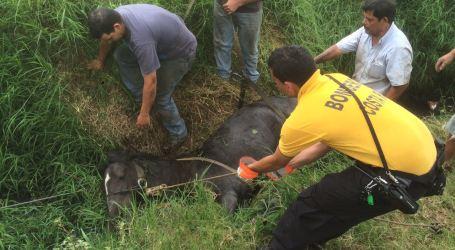 Bomberos de Cartago realizan impresionantes rescates animales