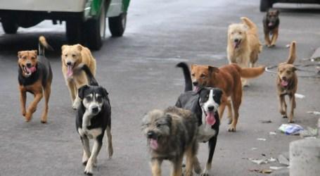 Mañana se inagurará el Centro Municipal de Educación para el Cuido Animal en Cartago