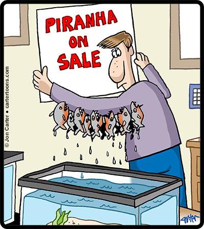 Piranha-Sale