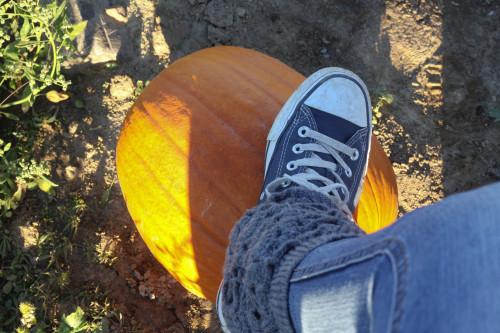 PumpkinPicking (13 of 19)