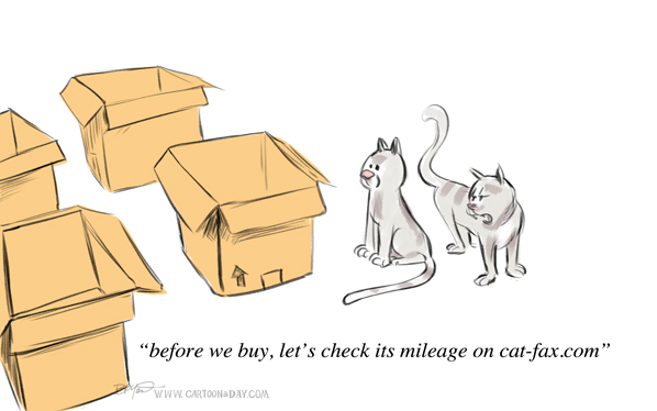 cats shopping for boxes