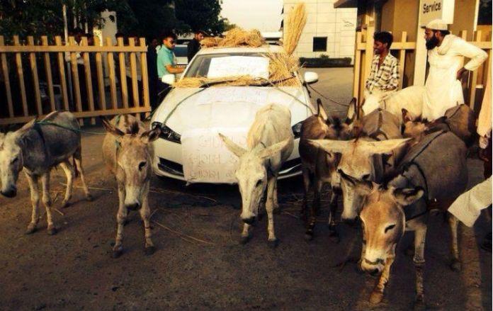 donkeys-Jaguar-XF