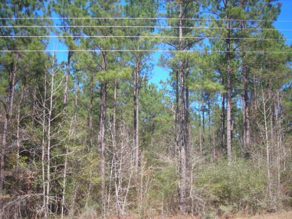 49-9-acres-warren-texas-77664