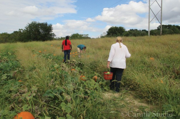 Pumpkin picking in the fields on a perfect fall day.