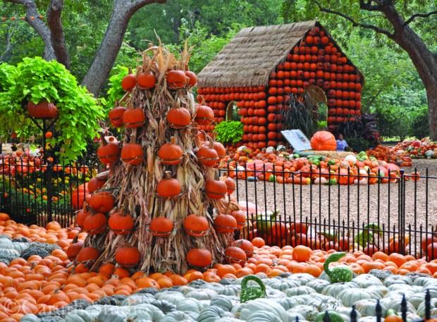 pumpkin garden with pumpkin house