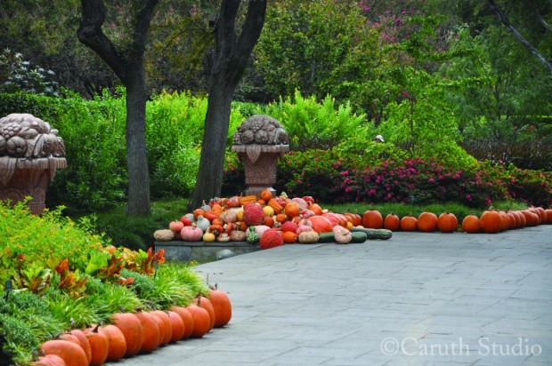 formal garden path with pumpkins lining pathway