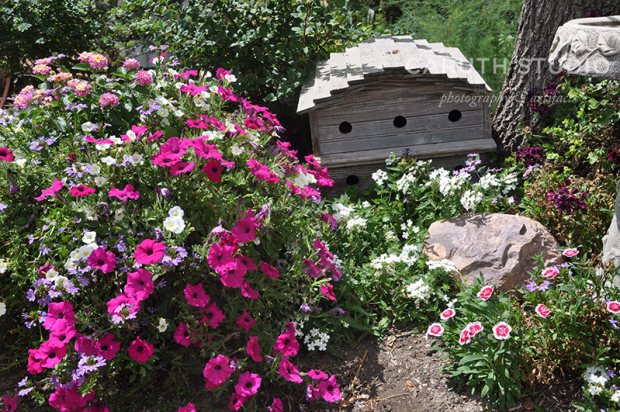 Birdhouse and annuals