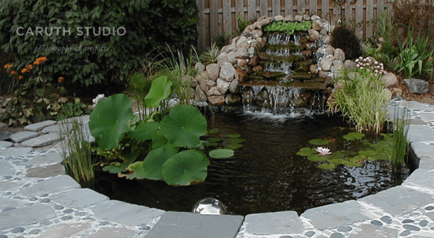 Plants in pond