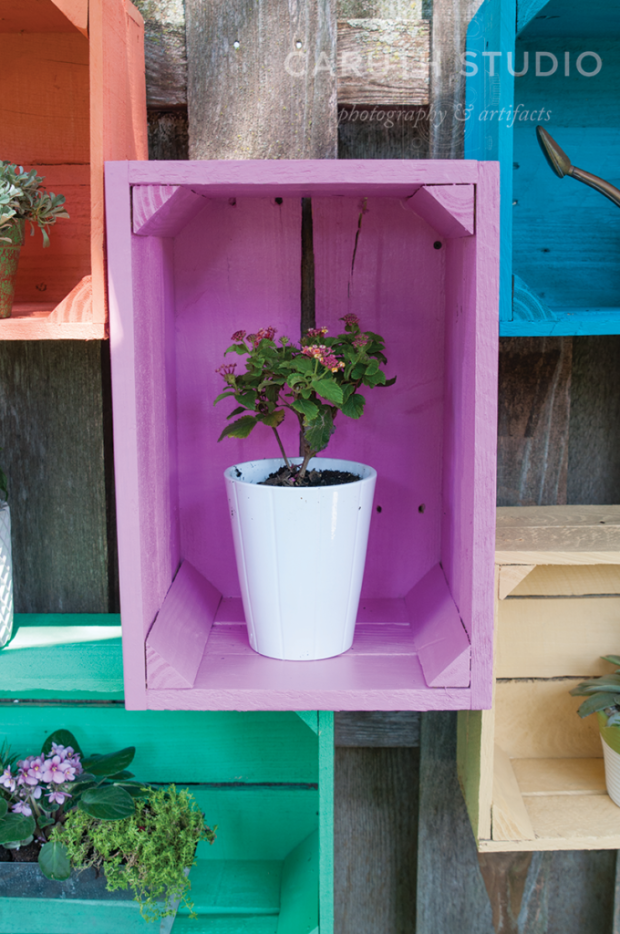 Painted crate with bonsai plant displayed inside