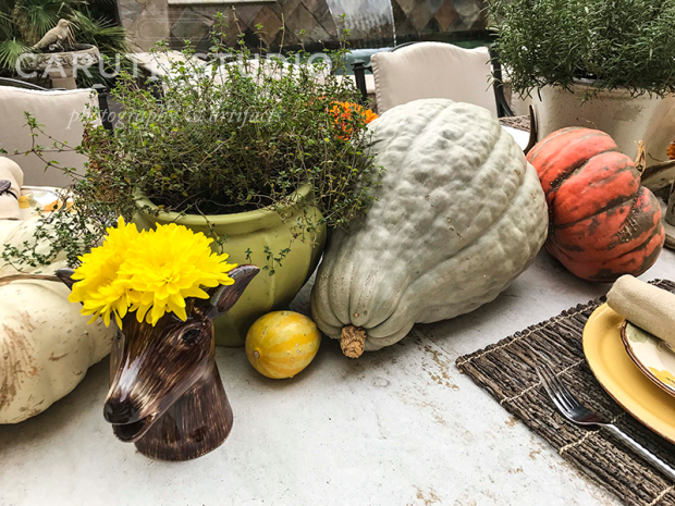 pumpkins, potted thyme and flowers in a ungulate shaped vase