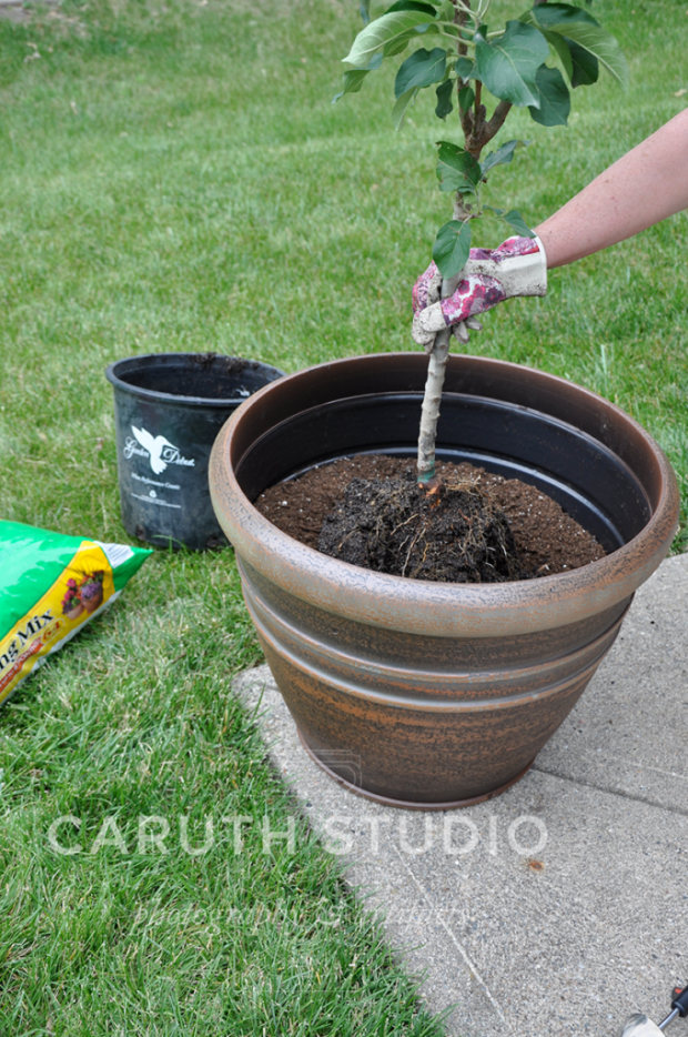 Potting soil in pot