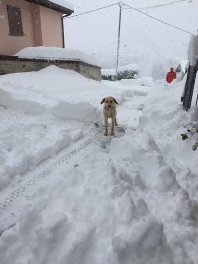 Luce con la neve