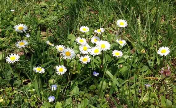 Contenti che un inverno si trasformi in primavera
