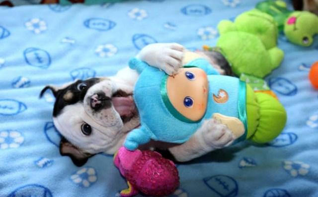 BonsaiBulldog7