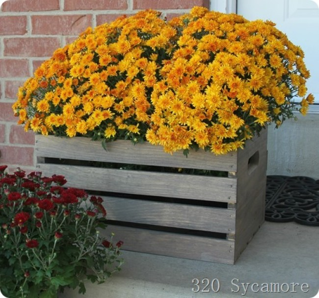 wood-crate-with-mums_thumb