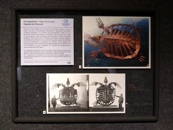 Museu Oceanográfico Univali Tartarugas