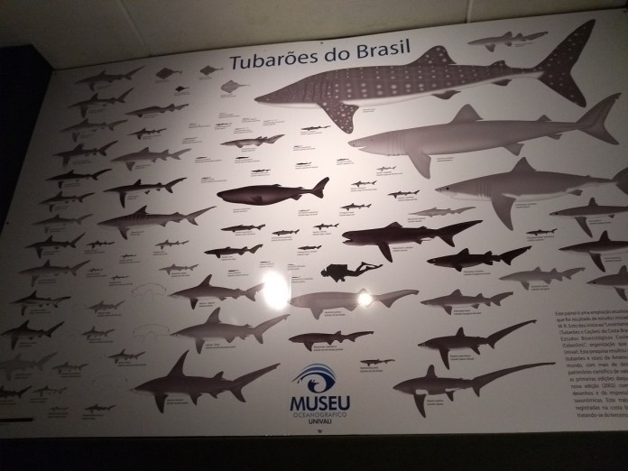 Museu Oceanográfico Univali Tubarões