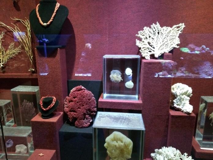 Museu Oceanográfico Univali Corais
