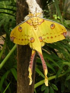 Casa delle Farfalle  Parco Monteserra