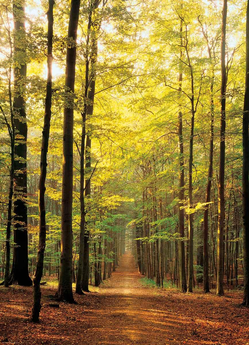 Comprar Puzzle Eurographics Camino en el Bosque de 1000