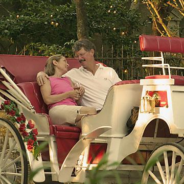 A romantic horse buggy tour