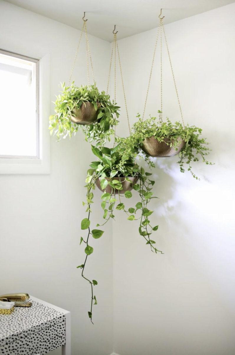 Le piante da appartamento rendono la casa più serena e vivace, aggiungono colore e sono decorative. Arredare Con Piante Foto Idee E Consigli