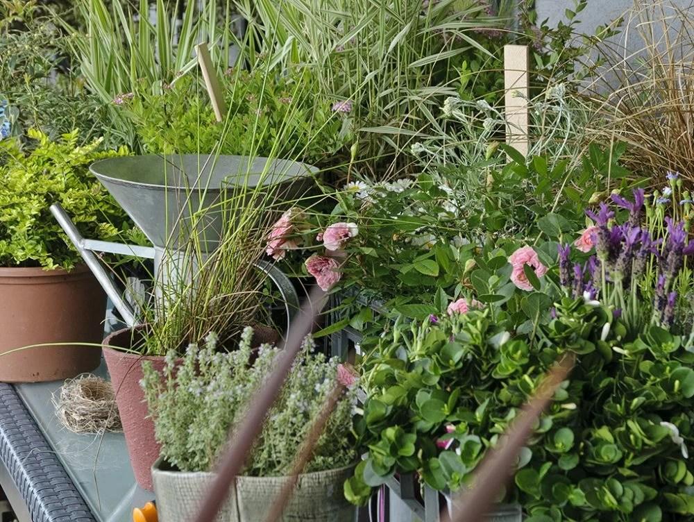 Giardinaggio Quando Rinvasare
