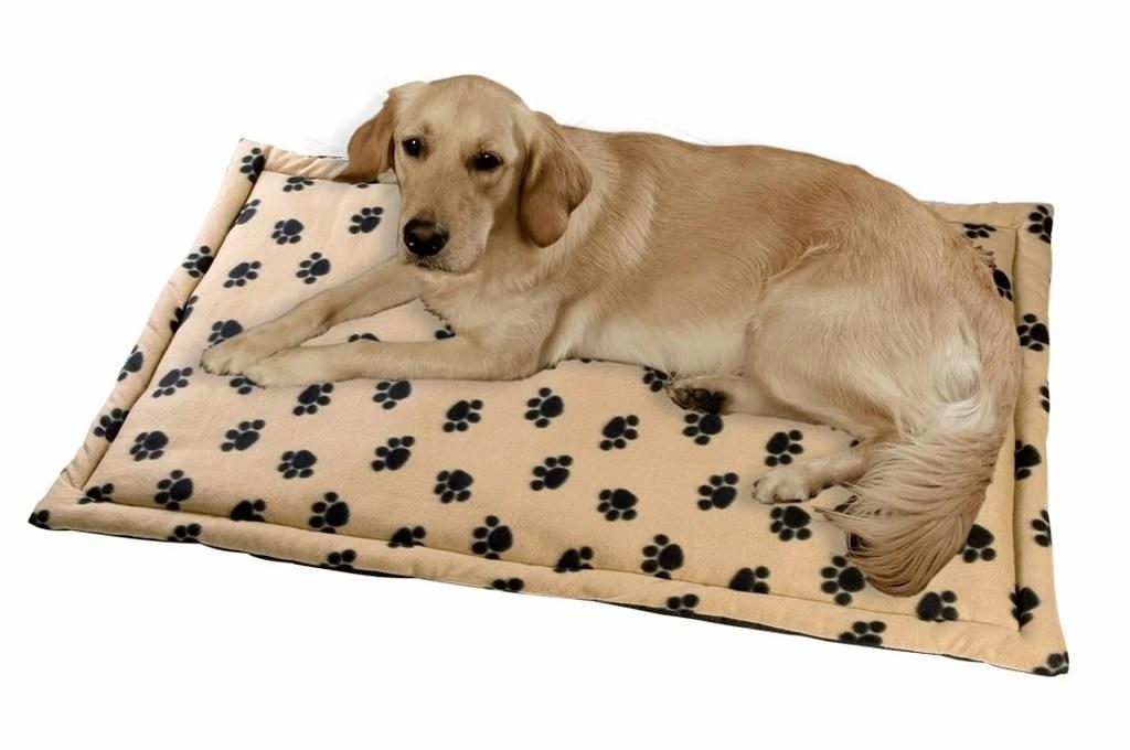 Come educare il cane a dormire da solo nella cuccia