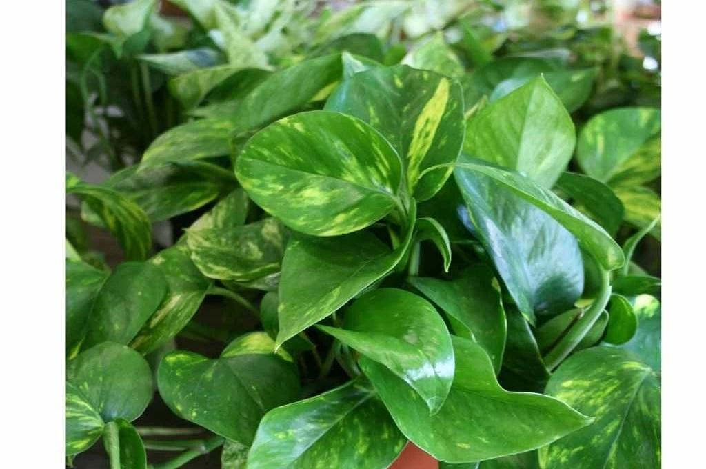 8 piante facili da appartamento  CASAfacile
