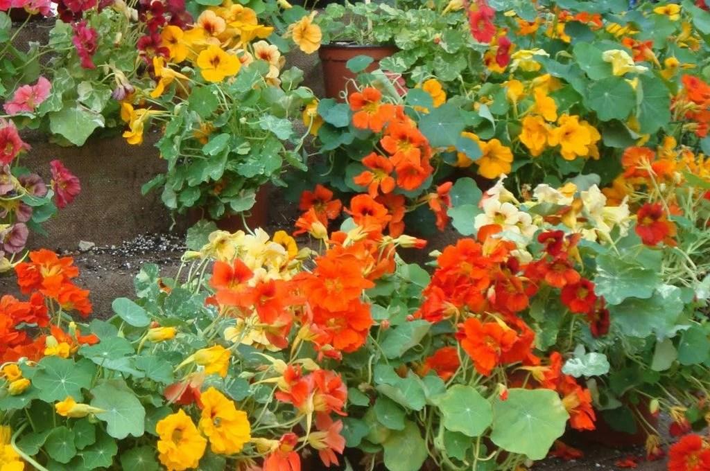 Esposizione a nord quali piante usare  CASAfacile