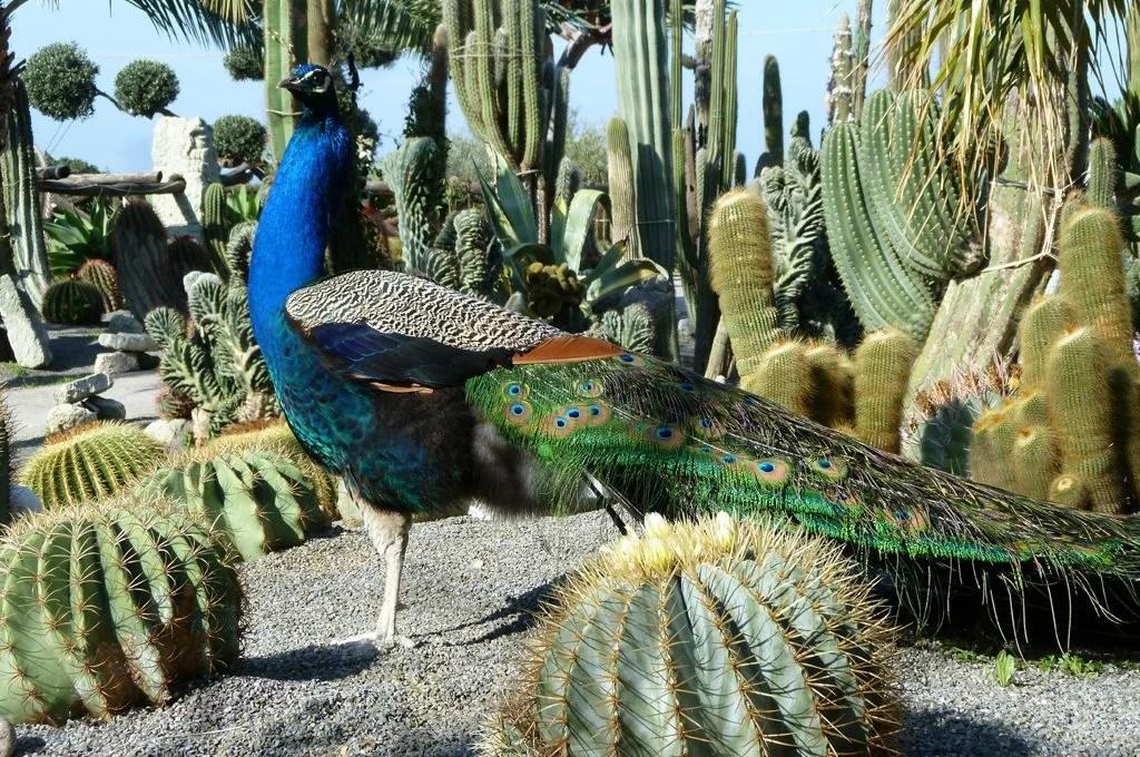 Piante grasse Tour nei giardini esotici  CASAfacile