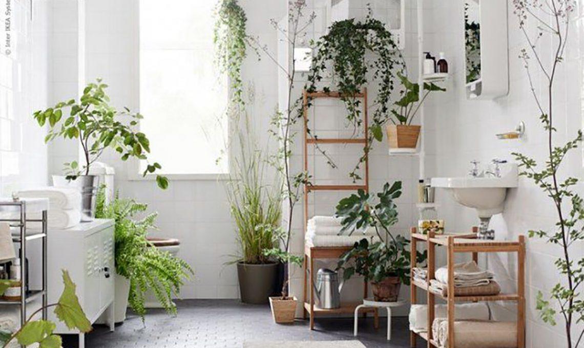 Puoi appenderli sul soffitto, sul terrazzo o in giardino. Piante Da Appartamento Perfette Anche In Bagno Casafacile