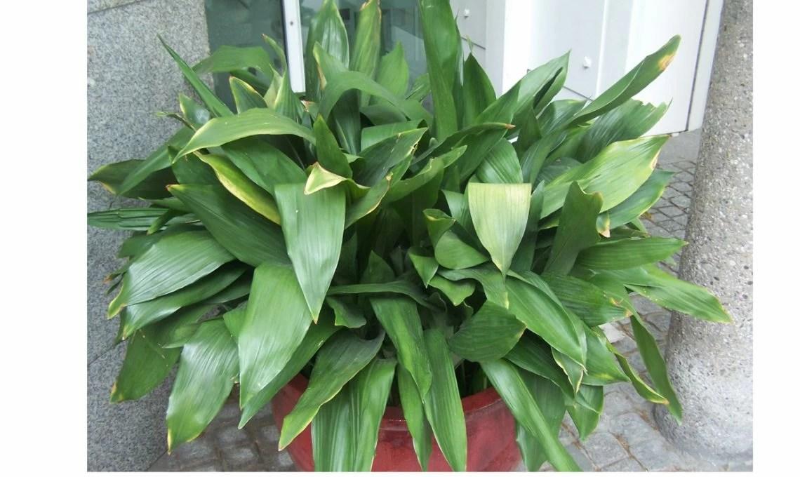 Le piante della nonna tornano di moda  CASAfacile